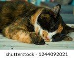 peaceful cat nap   Shutterstock . vector #1244092021
