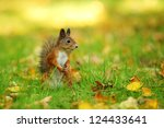 Squirrel In Grass In Park In...