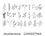 hand drawn floral branches ... | Shutterstock .eps vector #1244337964