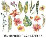 watercolor set of exotic... | Shutterstock . vector #1244375647