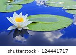 White Lily On The Lake With A...