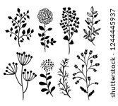 botanical vector set. beautiful ... | Shutterstock .eps vector #1244445937