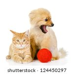 Stock photo orange cat and dog cat looking at camera isolated on white background 124450297