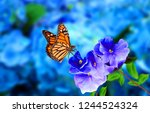 A Beautiful Butterfly On Blue...