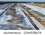 the felled trees lie under the... | Shutterstock . vector #1244558674
