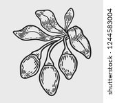 hand drawing engraving vector... | Shutterstock .eps vector #1244583004