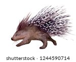 Watercolor illustration of an isolated porcupine with sharp quills on a white background. Painting of an African porcupine.