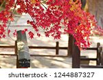 Small photo of Selective focus red maple leave and wooden fence , Beautiful nature landscape under daylight use for background or wallpaper .