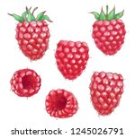 hand drawn watercolor... | Shutterstock . vector #1245026791