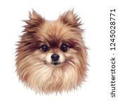 Pomeranian Dog. Illustration O...