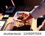 tucson  arizona  usa  arizona... | Shutterstock . vector #1245097054