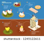 chicken production step by step ... | Shutterstock .eps vector #1245122611