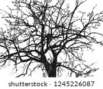ebony. the contour of a tree... | Shutterstock .eps vector #1245226087