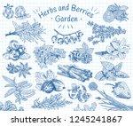 herbs   berries garden. vegan... | Shutterstock .eps vector #1245241867