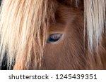 close up of the darkbrown eye... | Shutterstock . vector #1245439351