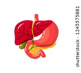 bile duct of a human.vector... | Shutterstock .eps vector #1245575881