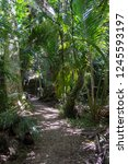 path through native plants and... | Shutterstock . vector #1245593197