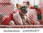 Stock photo beautiful christmas dog looking natural close up with wearing santa costume nice colorful 1245593377