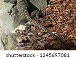 sydney australia  hind legs and ... | Shutterstock . vector #1245697081