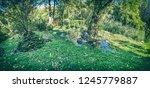 seasonal photo of city park in...   Shutterstock . vector #1245779887