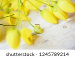 Ants And Yellow Flowers In...