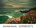 Pink Flowers And Sunset In...