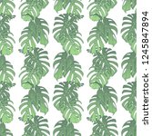 green onstera deliciosa... | Shutterstock . vector #1245847894