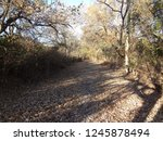 abandoned paved road in autumn | Shutterstock . vector #1245878494
