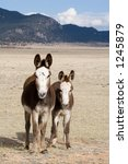 mama and baby burros share... | Shutterstock . vector #1245879