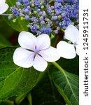 beautiful summer flowers | Shutterstock . vector #1245911731