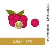 camu camu. leaves  berry.... | Shutterstock . vector #1245938317