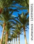 palm tree alley   Shutterstock . vector #1245940051