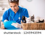 vet doctor examining kittens in ... | Shutterstock . vector #1245943594