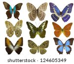 butterfly on white | Shutterstock . vector #124605349