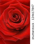 Stock photo red rose macro 124617847