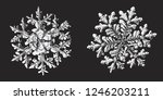 two snowflakes on black... | Shutterstock .eps vector #1246203211