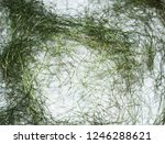 intertwined threads. the... | Shutterstock . vector #1246288621
