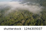 aerial view tropical forest...   Shutterstock . vector #1246305037