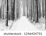 black and white photo of winter ...   Shutterstock . vector #1246424731