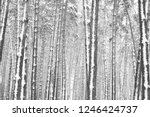 black and white photo of winter ...   Shutterstock . vector #1246424737