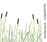 Reed And Green Grass Background ...