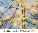fallen from a tree leaves on... | Shutterstock . vector #1246568161