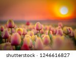 group of colorful tulips.... | Shutterstock . vector #1246616827