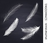 chalk drawn spruce branch on...   Shutterstock .eps vector #1246632061