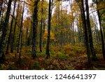 hiking through the schwarzwald...   Shutterstock . vector #1246641397