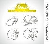 lemon. set of fresh fruits ... | Shutterstock .eps vector #1246684267