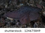 Small photo of Near a coral reef in Indonesia, a Cockatoo waspfish (Ablabys taenianotus) sways back and forth on and sand and rubble bottom acting as if it is a submerged leaf.