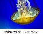 Golden Yellow Jelly Fish...
