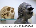 Skull And Neanderthal Sculptur...