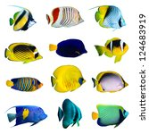 Tropical Fish Collection On...